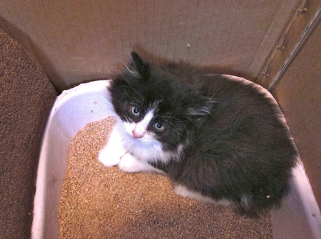 How To Find The Best Litter Box for Adult Feral Cats | Information on Cat Litter | Scoop.it