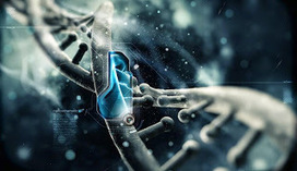 Germline Science & Embryo Use - The Law & Scope for Applied Research   Stem Cell News   Scoop.it