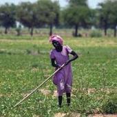 Sudan Vision Daily - Details   EDP 4: Sudan   Scoop.it