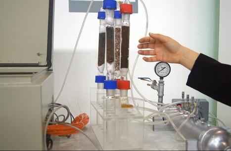Mediante Bacterias Determinan Toxicidad en la Industria | Food Safety and Quality | Scoop.it
