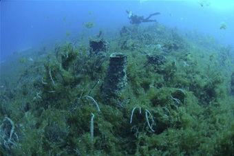 Wastewater in the Florida Keys Contributing to Coral Reef Decline   Info Junkie   Scoop.it
