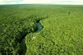 Floresta Amazonica | Comentário das aulas de biologia | Scoop.it