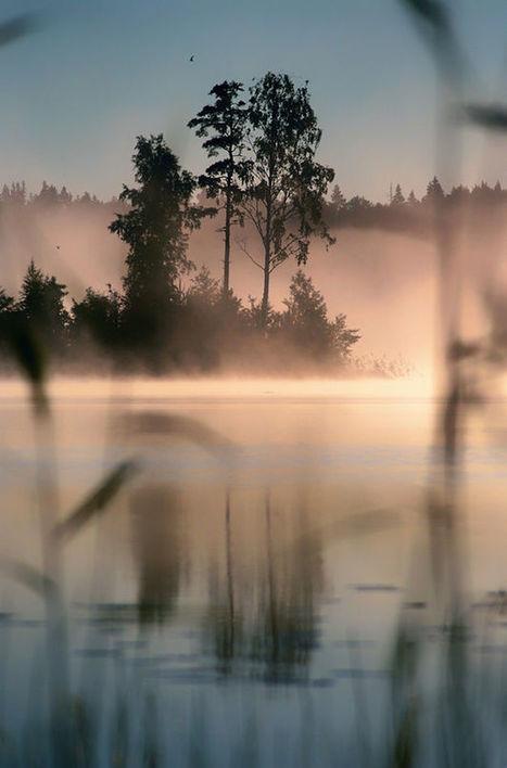 Mist byNatalia Markelova | My Photo | Scoop.it