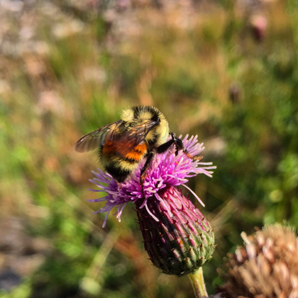 Is the EPA doing enough to protect bees? | Miel Melipona | Scoop.it