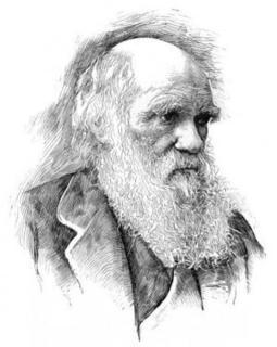 First large-scale formal quantitative test confirms Darwin's theory of universal common ancestry | Modern Atheism | Scoop.it