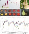 Elucidation of the first committed step in betalain biosynthesis enables the heterologous engineering of betalain pigments in plants - Polturak - 2015 - New Phytologist - Wiley Online Library | plant cell genetics | Scoop.it