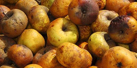 L'enjeu de la conservation post-récolte | Arboriculture: quoi de neuf? | Scoop.it