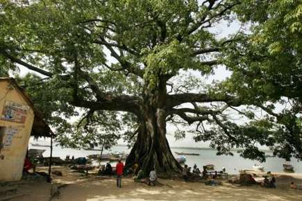 Senegal's southern forests may disappear by 2018: ecologist | Forest | Scoop.it