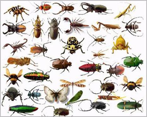 شركة مكافحة حشرات بالرياض 0544521424 بسمة الرياض | بسمة الرياض 0544516494 | شركة بسمة الرياض | Scoop.it