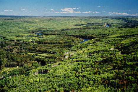 Why We Can't Fight Climate Change without an Intact Boreal Forest | Lorraine's Environmental Change &  Management | Scoop.it