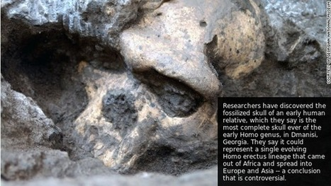 Rare skull sparks human evolution controversy | History | Scoop.it