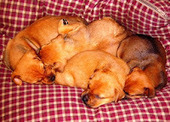 How to Wean Puppies to a Raw Food Diet   Pet News   Scoop.it