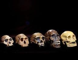 Human evolution - New Scientist | Inside and Outside Travels | Scoop.it