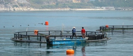 Farming aquatic animals for global food system resilience - Stockholm Resilience Centre | Global Aquaculture News & Events | Scoop.it