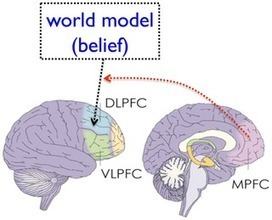 The Gambler's Fallacy Is Associated with Weak Affective Decision Making but Strong Cognitive Ability | Brain Imaging and Neuroscience: The Good, The Bad, & The Ugly | Scoop.it