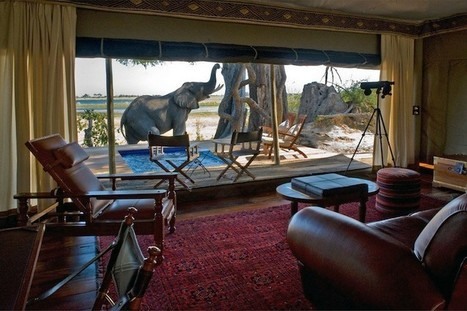 $800K African Safari Via Private Plane From Extraordinary Journeys | Travel and tour | Scoop.it