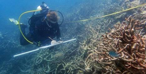 El cambio climático destruye la mitad del mayor arrecife de coral de Japón | Climax | Scoop.it