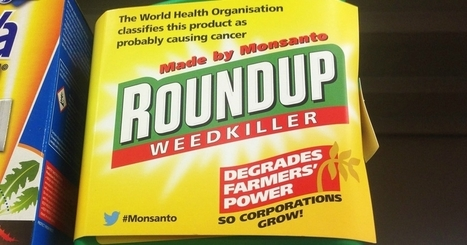 Paving Way for Glyphosate Recall, EU Punts on Relicensing Weed Killer | sustainablity | Scoop.it