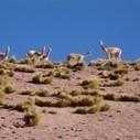 Atacama, un désert à découvrir avec ses habitants | Les déserts dans le monde | Scoop.it