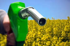 Fuel Crops Displacing Vital Food Plants | Food issues | Scoop.it