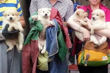 Four Puppies Rescued from Yulin Dog Meat Festival in China   Nature Animals humankind   Scoop.it