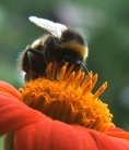The buzz about pesticides | BBSRC News Coverage | Scoop.it