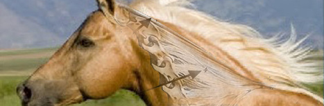 The Disturbing Truth About Neck Threadworms and Your Itchy Horse - The Horse's Back | Holistic Horses from PENZANCE Equine Integrative Solutions | Scoop.it