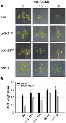 Specific Missense Alleles of the Arabidopsis Jasmonic Acid Co-Receptor COI1 Regulate Innate Immune Receptor Accumulation and Function | Plant-microbe interaction | Scoop.it