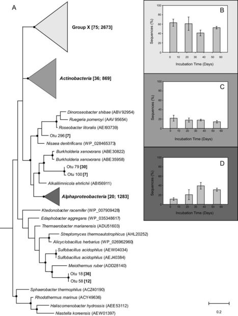 Identification of Unknown Carboxydovore Bacteria Dominant in Deciduous Forest Soil via Succession of Bacterial Communities, coxL Genotypes, and Carbon Monoxide Oxidation Activity in Soil Microcosms | Plant-Microbe Symbiosis | Scoop.it