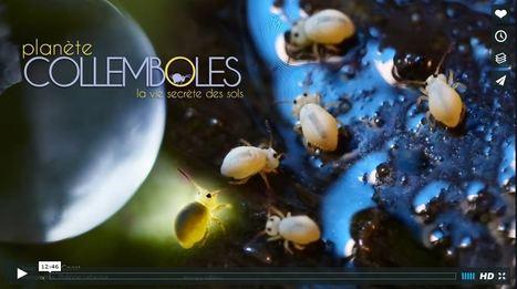Les collemboles artisans de la terre | Variétés entomologiques | Scoop.it
