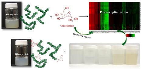 Using Proteomics Analysis to Uncover Protein Glycosylation   Mirko ...   Proteomics   Scoop.it