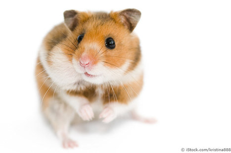 Stop Animal Fighting Experiments at Northeastern University! | Action Alerts | Actions | PETA | Animals R Us | Scoop.it
