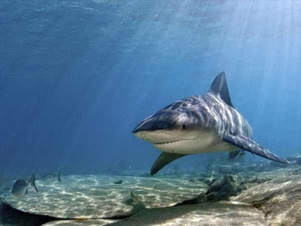 Amazing Facts About Shark - Interesting Facts You Should Know   Every Thing Around the World   Scoop.it