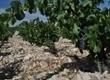 L'Oenotourisme sur internet, quelles tendances et quelles pratiques, Salon 2.0 de Vinisud | Tourisme viticole en France | Scoop.it