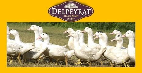 Les Mots du Vin : Delpeyrat se lance dans le vin -   Le vin quotidien   Scoop.it