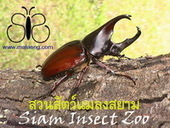 Chiang Mai Siam Insect Zoo | Chiang Mai Tourist Attractions | Scoop.it