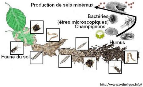 Géochimie de la Matière Organique dans les sols | Les fractions de la MO | Scoop.it