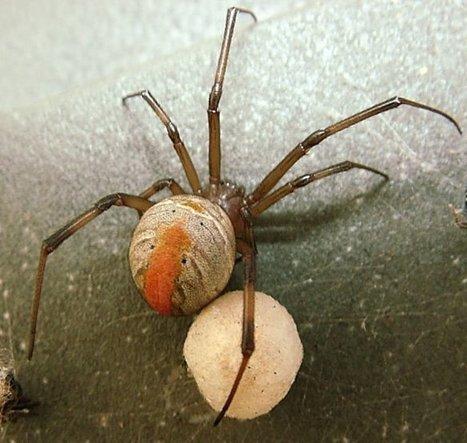 rb.16.12030011.jpg (688x653 pixels) | Spiders | Scoop.it