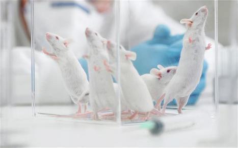 Les tests pour la commercialisation de produits chimiques et d'OGM sont faussés par l'alimentation des rats de laboratoire | Think outside the Box | Scoop.it
