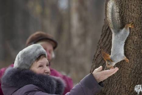 Russian poachers plaguing parks as Moscow goes nuts for squirrels | Wildlife Trafficking: Who Does it? Allows it? | Scoop.it