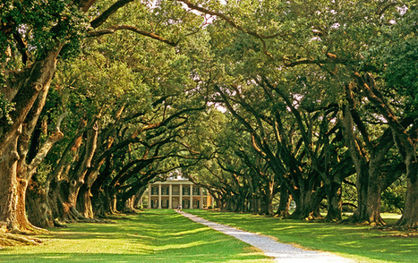 Oak Alley on the River Road | Oak Alley Plantation: Things to see! | Scoop.it