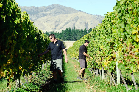 N. Zealand wineries seek 'Lord of the Rings' inspiration in export push | Wine from Down Under | Scoop.it