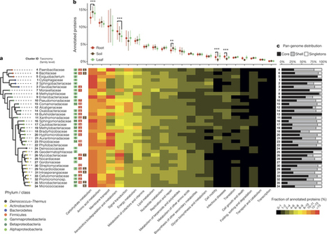 Functional overlap of the Arabidopsis leaf and root microbiota : Nature : Nature Publishing Group | plant pathology | Scoop.it