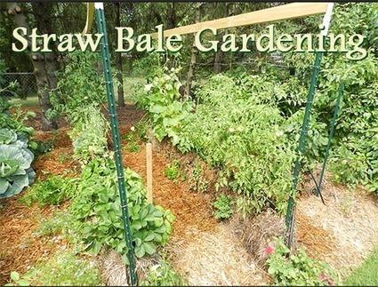 Straw Bale Gardening Beautiful Home Gardens