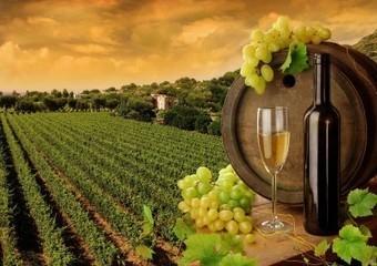 Chemins de vins - Le Vif   Oenotourisme   Scoop.it