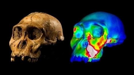 El 'Australopithecus sediba', no se alimentaba de alimentos duros debido a su mandíbula | Arqueología, Historia Antigua y Medieval - Archeology, Ancient and Medieval History byTerrae Antiqvae (Blogs) | Scoop.it