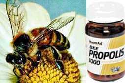 Propiedades del Propóleo, un Antibiótico Natural | Apicultura Investigación | Scoop.it