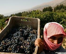 Making Wine in Wartime Syria | Vitabella Wine Daily Gossip | Scoop.it