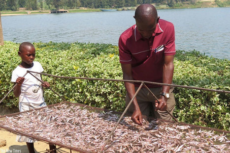 Danish fish feed production plant to open shop in Rwanda.@investorseurope | Taxing Affairs | Scoop.it