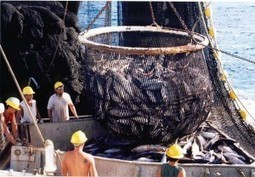 Summary of the Indian Ocean Tuna Commission Meeting | Global Aqua Link | Fisheries & Fishing Technology | Scoop.it